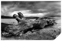 Driftwood, Print