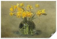 Springtime Daffodils, Print