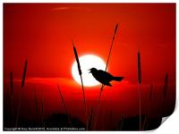 Lone Singing Blackbird, Print