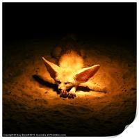 Golden Desert Fox, Print