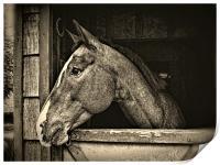 A Horse Of Course - Mono, Print