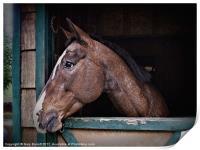 A Horse Of Course - Retro, Print