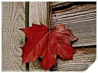 Autumn leaf just hanging around, Print