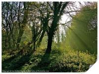 Sun breaking through the tree's, Print