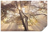 Tree, sun rays, early mist, Print