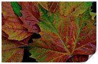 The Colour of Autumn , Print