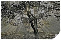 Autumn into Winter Sun Rays, Print