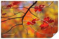 The Glory of Fall, Print