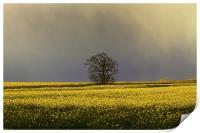 Stormy sky over rape field, Print