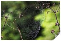Spiders Web covered in dew, Print