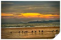Oystercatchers on the beach, Print