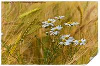 Todays flower, tomorrows flour, Print