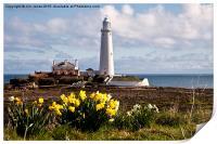 St Mary's Island in springtime, Print