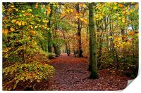 Autumn Woodland, Print