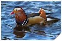 Mandarin Duck, Print
