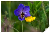 Cranesbill, buttercup and wasp, Print