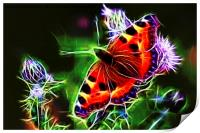 Electric Peacock Butterfly, Print