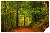 Artistic Walk through the woods, Print
