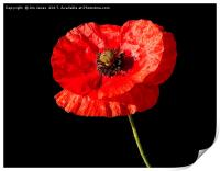 Remembrance Poppy, Print