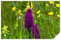 Orchids in a Summer Meadow, Print