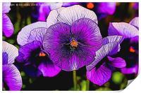 Artistic Purple Pansies, Print