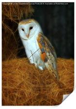 Barn Owl, Tyto alba, Print