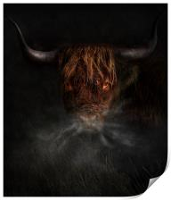 A west highland cow, Print
