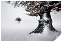 Oak in the snow, Print