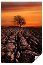 Malham tree sunrise, Print