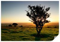Dartmoor Sunset Tree, Print