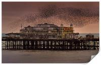 West Pier Starlings, Brighton, Print