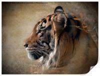 Tiger Portrait, Print