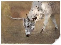 Texas Longhorn Cow, Print