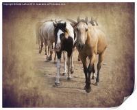 American Quarter Horse Herd, Print
