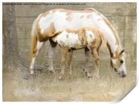Pinto Mare and Filly, Print
