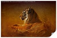 Dont Wake a Sleeping Tiger, Print