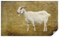 Billy Goat Gruff, Print