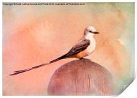 Scissor-tailed Flycatcher, Print