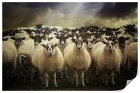Sheepfest, Print