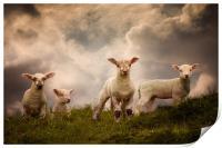 Lambs, Print