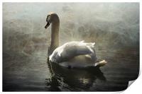 Swan Mist, Print