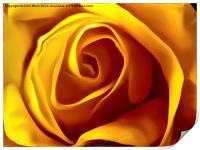 Opening Rose Bud, Print