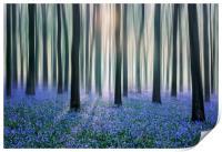 Bluebell Woods, Print