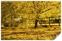 Golden Autumn leaves, Print