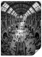 Natural History Museum, London, Print