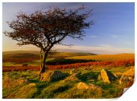 Hawthorn Tree,Two Moors Way, Print