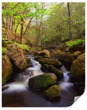 Spring in Padley Gorge, Print
