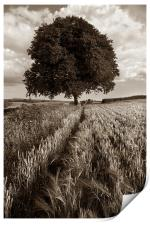 Barley Field & Oak Tree,Somerset, Print
