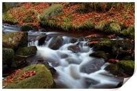 Autumn In Padley Gorge, Print