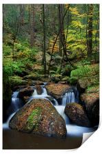 Wyming Brook Nature Reserve, Print